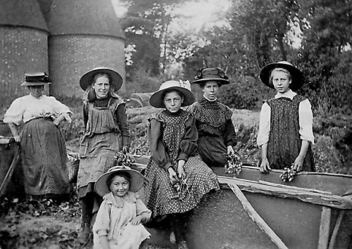 Hop-growing was a thriving industry in Kent employing thousands of workers.  In its heyday between 1860 and 1880 over 46,600 acres of Kent land were given over to hop cultivation. In 1906 two thirds of all hops grown in England came from Kent.